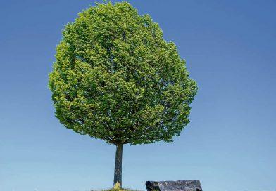 Zu persönlichen Anlässen in Meinersen einen Baum pflanzen. Diese Idee der CDU und Grünen kommt beim Sozialausschuss gut an.